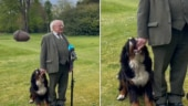 Irish President's dog interrupts official address. Viral video will make you go aww