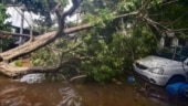 High-velocity storm uproots trees, disrupts power supply in Chandigarh