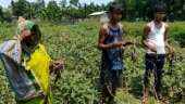 Second wave of Covid-19 impacts farm sector in Assam
