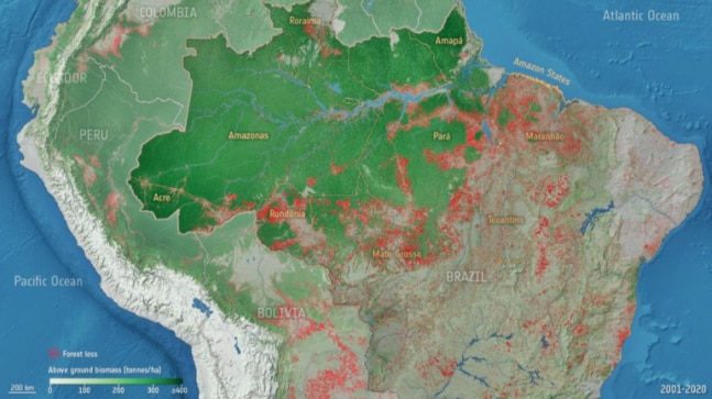 Amazon on the brink: Forest degradation driving carbon loss in the Brazilian rainforest