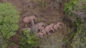 China's famed wandering elephants on the move again