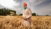 Madhya Pradesh loses top wheat procurer tag to Punjab; can it bounce back?