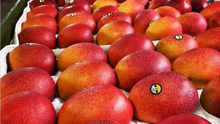 Miyazaki: This mango variety being grown in MP could cost you Rs 2.7 lakh per kilogram - India News
