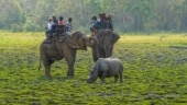 Assam villagers donate around 33 acre land to create separate food zones for wild elephants
