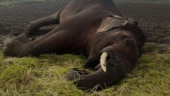 Elephant found dead in Bengal, electrocution suspected