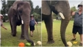 Elephant enjoys delicious fruity meal in cute viral video. Watch