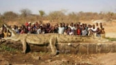 Fact Check: This is not Gustave, the mammoth man-eating croc of Africa's wetlands