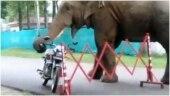 Wild elephant eats helmet in viral video from Guwahati. Watch