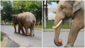 Wild elephant plays with basketball in viral video from Guwahati. Watch
