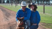 Australian kelpie sold for a whopping sum of USD 27,000 at dog auction