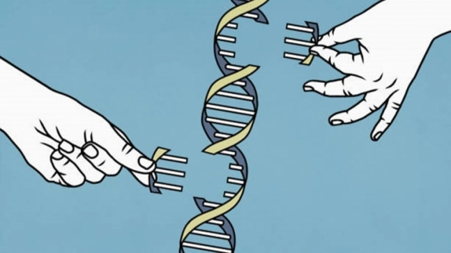 Scientists complete decoding human genome, uncover over 100 new genes, variations