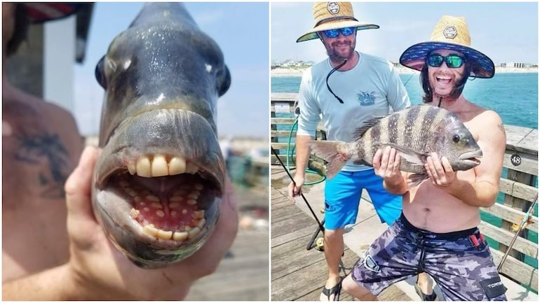 Fish with human-like teeth caught in US, pics go viral