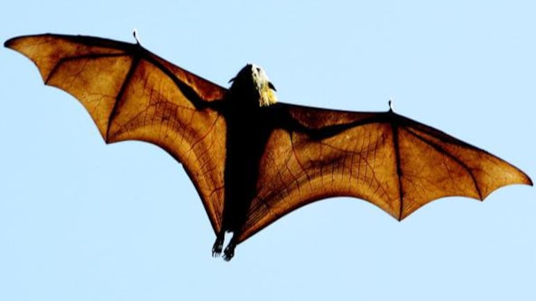 What is Nipah virus that claimed life of Kerala boy   All you need to know