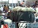 Elephant amok at Tirupati temple
