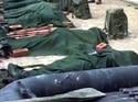 Army kills 12 militants in Jammu and Kashmir, foils infiltration bid