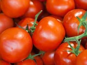 After onions, now tomatoes touch Rs 100 per Kg
