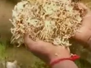 Food crisis: Rice rots in govt warehouse in Darbhanga