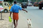Kerala dog culling: Organisation set up to kill street dogs