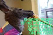 Man lives with pet wallaby at home