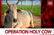 Operation Holy Cow: Will PM act on his word and ensure vigilantes are brought to justice?
