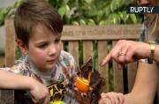 Hundreds of tropical butterflies released in Natural History Museum