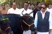 Samajwadi Party leader Azam Khan returns cow gifted to him, fearing someone might kill her to defame him