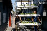 Solar-Powered Mobile Garden Brings Fresh Produce to Crowded Beijing Suburb