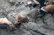 Three Poor Puppies Rescued from Tar Pit Make Full Recovery