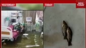 Clean-up in Patna hospital after fish found swimming in waterlogged ICU