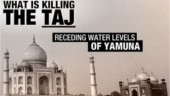 What is killing the Taj?
