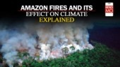 Everything you need to know about the Amazon rainforest fire
