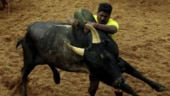 Bull-taming sport Jallikattu begins in Madurai; BSY vs Lingayat seer over ministerial berth for MLA; more