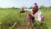 Maharashtra: Farmers reel under fraudulent loan scam | Watch