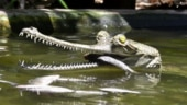 Chennai: Lockdown hits India's oldest reptile park, officials seek public support to feed crocs