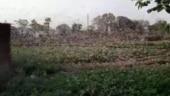 Millions of locusts wreak havoc in several parts of India