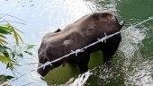 Kerala elephant death: Stern action will be taken, says Union Environment Min Prakash Javadekar