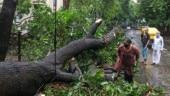 Cyclone Nisarga weakened by the time it struck Mumbai, maximum damage caused to trees