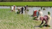Watch: Farmers vs central government