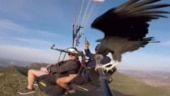 Image of the Day: Video of vulture on paraglider's selfie stick in Spain goes viral