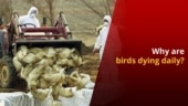 States on alert as Bird Flu spreads in India
