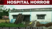 Hospital horror   Planned hospital turns into cowshed in Bihar