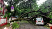 Cyclone Tauktae: Over 100 houses damaged in Goa, highways blocked