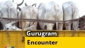Encounter breaks out between cattle smugglers and Haryana Police in Gurugram