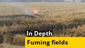 Fuming fields: A ground report from Punjab's farms