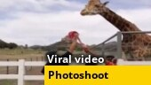 Image of the Day: Giraffe tries to steal groom's turban during wedding photoshoot