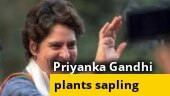 World Environment Day: Priyanka Gandhi plants sapling, pledges to protect climate