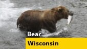 Image of the day: Family rescues bear swimming with plastic tub on head in Wisconsin