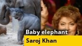 Image of the Day: Baby elephant rescued from well, Bollywood bids goodbye to Saroj Khan
