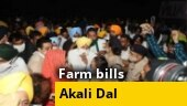 Farm bills protest: Akali Dal leaders Sukhbir, Harsimrat Badal briefly detained in Chandigarh