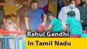 This Pongal, Rahul Gandhi attends Jallikattu event in Madurai; kickstarts TN poll campaign